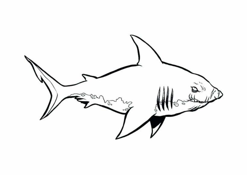 Những tranh tô màu cá mập dễ thương cho bé tập tô (1)