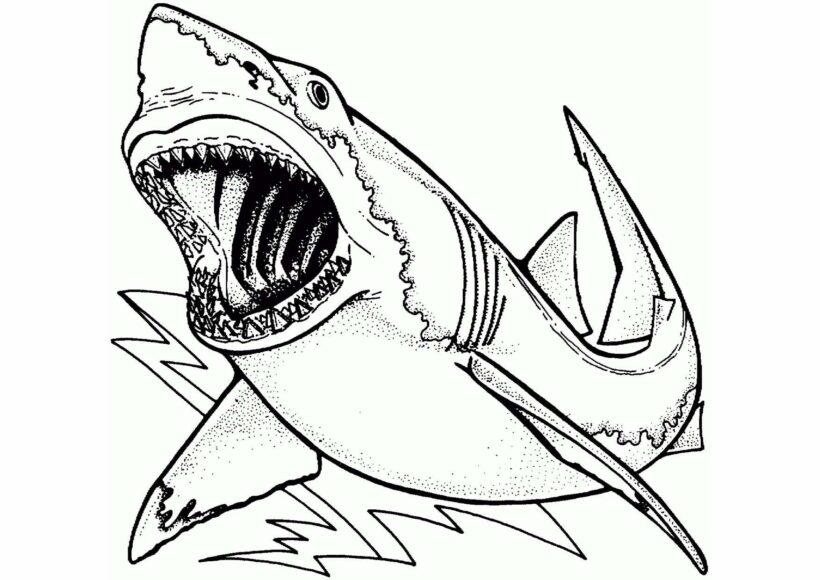 Những tranh tô màu cá mập dễ thương cho bé tập tô (6)