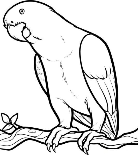 Những tranh tô màu con vật cho bé tập tô (2)