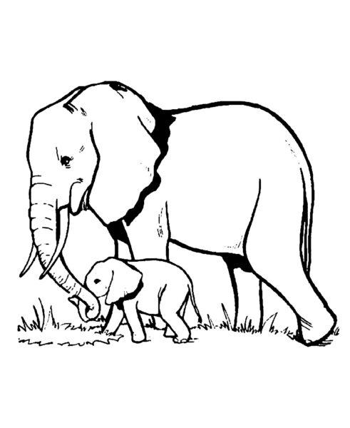 Những tranh tô màu con voi đẹp nhất cho bé tập tô (4)