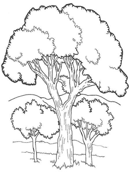 Những tranh tô màu phong cảnh cho bé tập tô (1)