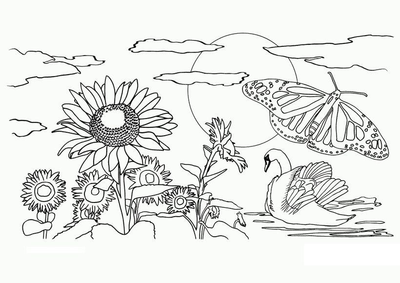 Những tranh tô màu phong cảnh cho bé tập tô (4)