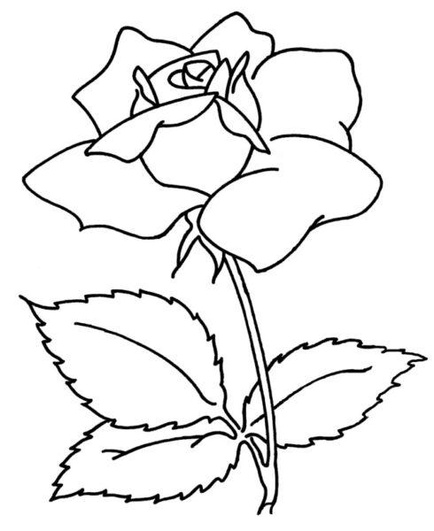 Tranh tô màu bông hoa đẹp nhất cho bé tập tô (28)