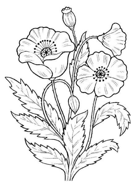 Tranh tô màu bông hoa đẹp nhất cho bé tập tô (5)