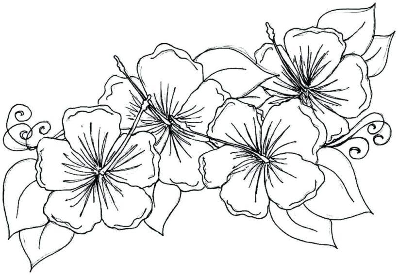 Tranh tô màu bông hoa đẹp nhất cho bé tập tô (6)