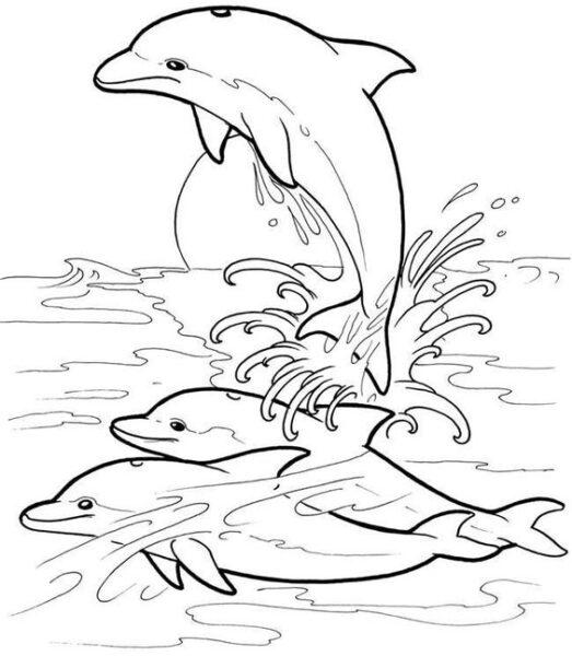 Tranh tô màu cá heo đẹp nhất cho bé tập tô (38)