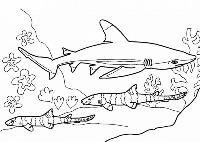Tranh tô màu cá mập đẹp nhất cho bé tập tô (42)