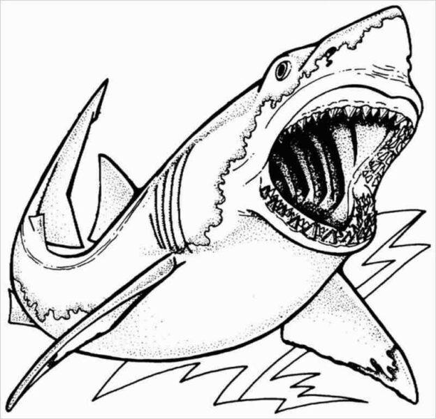 Tranh tô màu cá mập đẹp nhất cho bé tập tô (45)