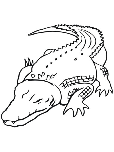 Tranh tô màu cá sấu đẹp nhất cho bé tập tô (27)