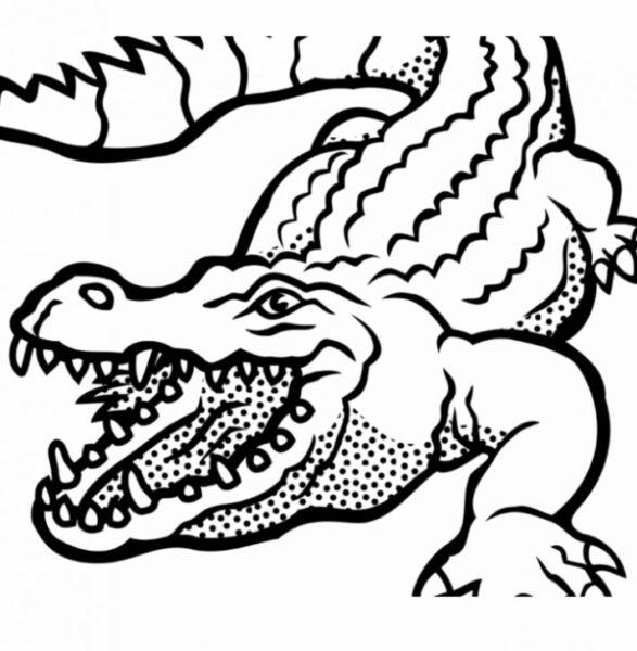 Tranh tô màu cá sấu đẹp nhất cho bé tập tô (31)