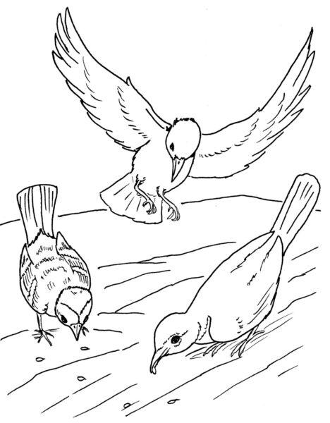 Tranh tô màu con chim dễ thương cho bé tập tô (28)