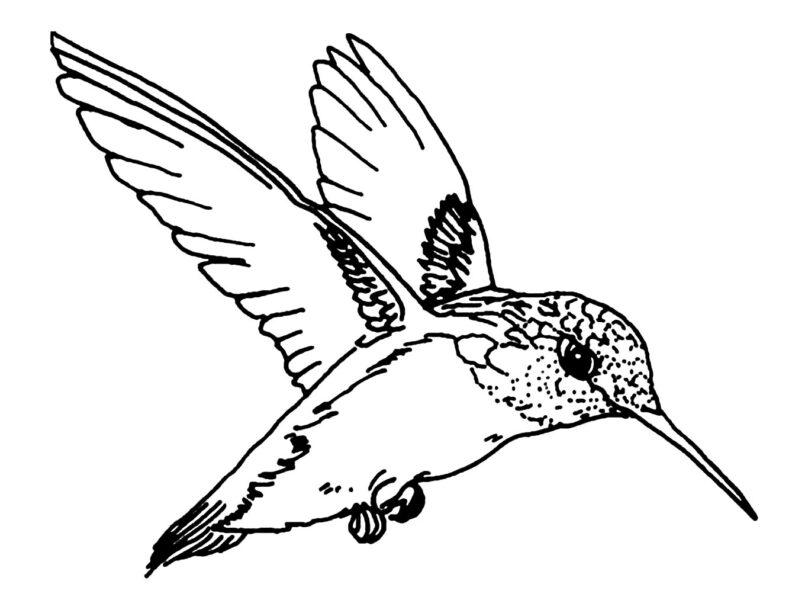 Tranh tô màu con chim dễ thương cho bé tập tô (29)