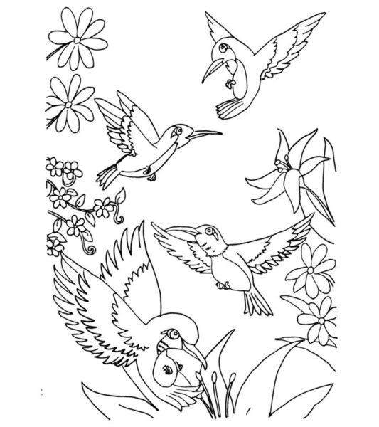Tranh tô màu con chim dễ thương cho bé tập tô (31)