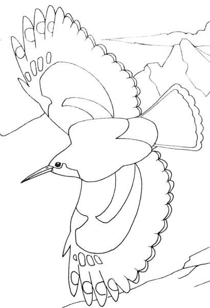 Tranh tô màu con chim dễ thương cho bé tập tô (32)