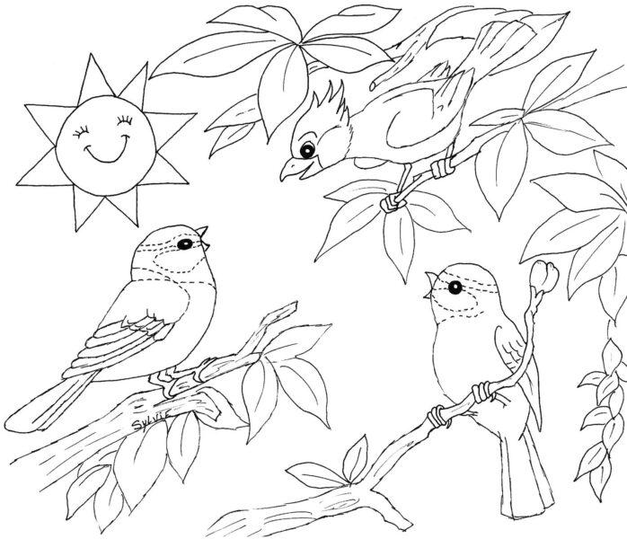 Tranh tô màu con chim dễ thương cho bé tập tô (33)