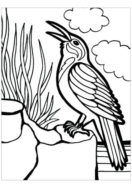 Tranh tô màu con chim dễ thương cho bé tập tô (34)