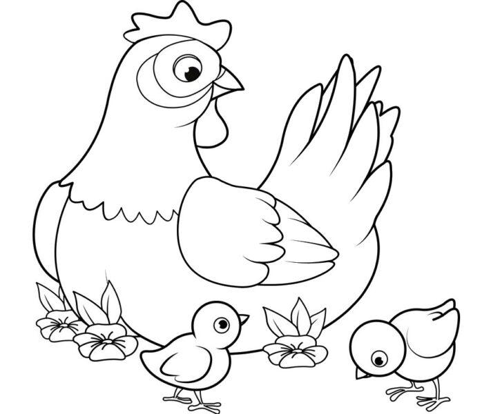 Tranh tô màu con gà đẹp nhất cho bé tập tô (13)