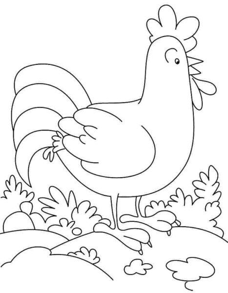 Tranh tô màu con gà đẹp nhất cho bé tập tô (19)