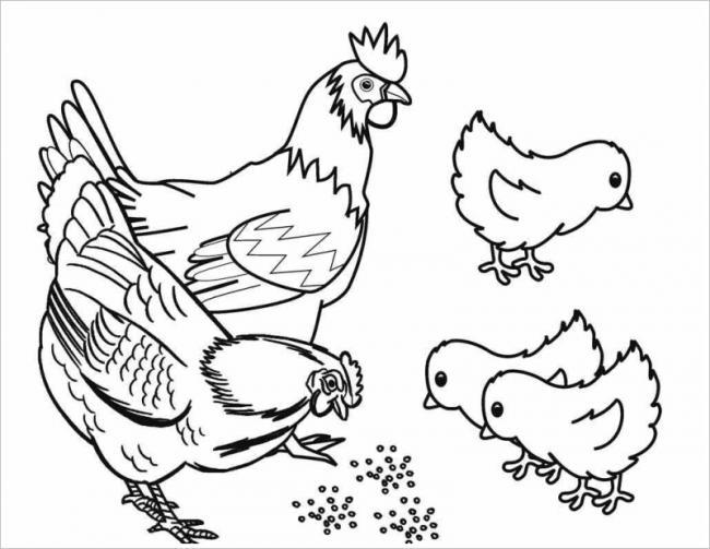 Tranh tô màu con gà đẹp nhất cho bé tập tô (21)