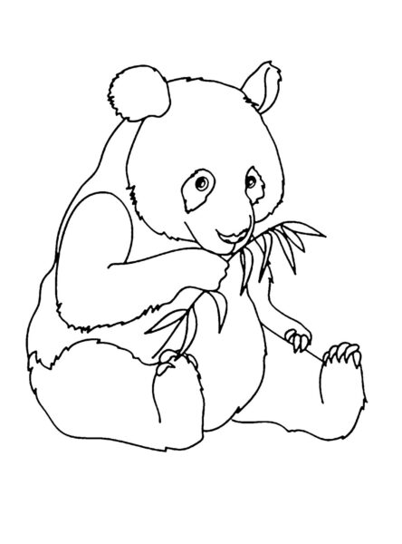Tranh tô màu con gấu trúc