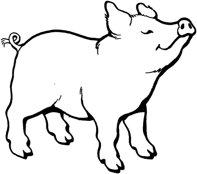 pig clipart black and white Best of Pig clipart black and white Pencil and in color pig clipart