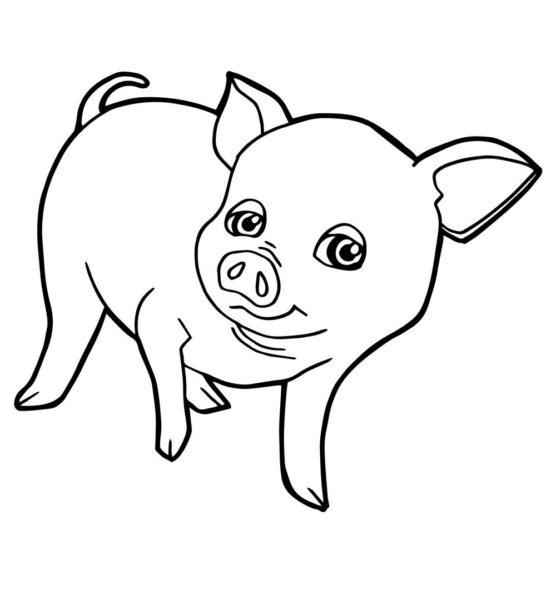 Tranh tô màu con lợn đẹp