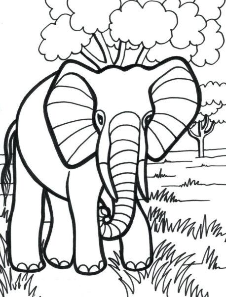 Tranh tô màu con voi đẹp nhất cho bé tập tô (19)