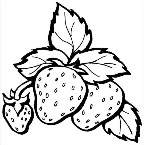 Tranh tô màu trái cây đẹp, đơn giản cho bé tập tô (2)