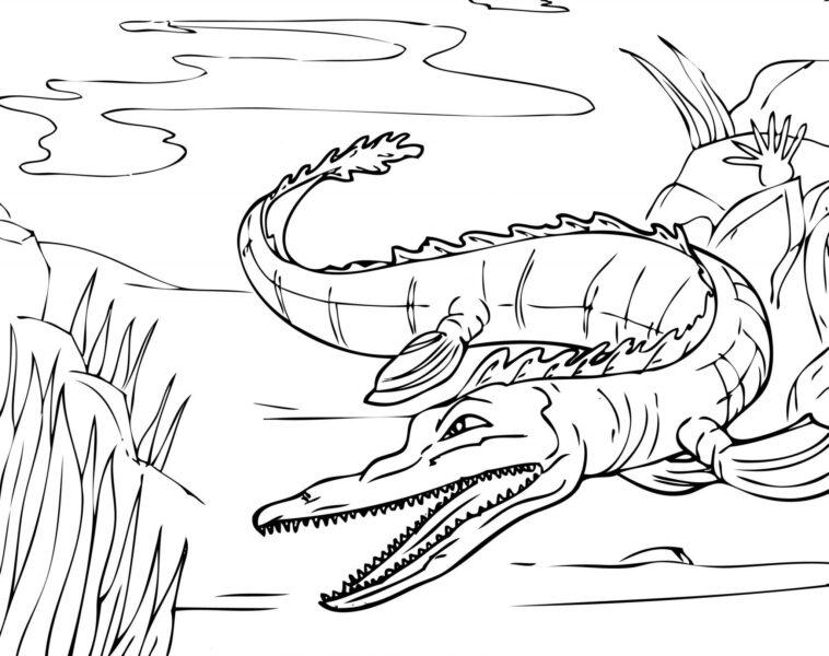 Tranh vẽ chưa tô màu cá sấu đẹp cho bé tập tô (1)