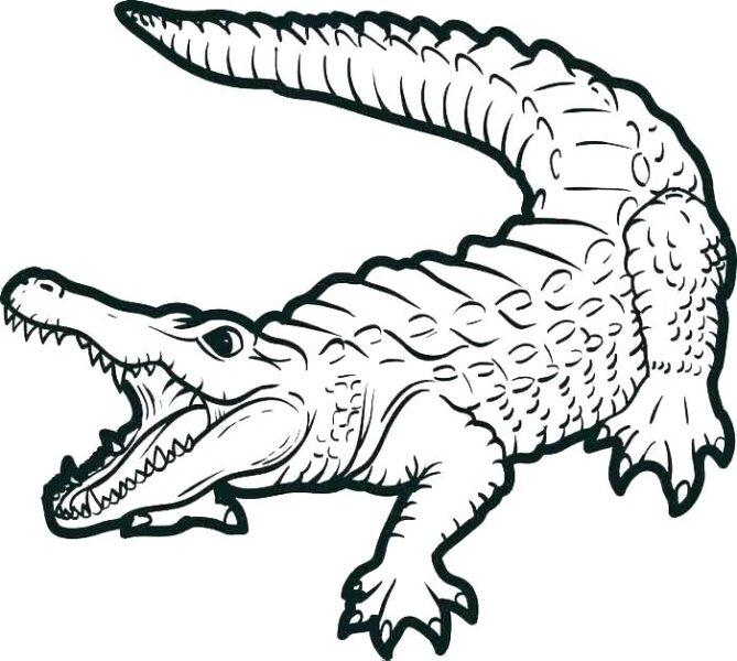 Tranh vẽ chưa tô màu cá sấu đẹp cho bé tập tô (3)