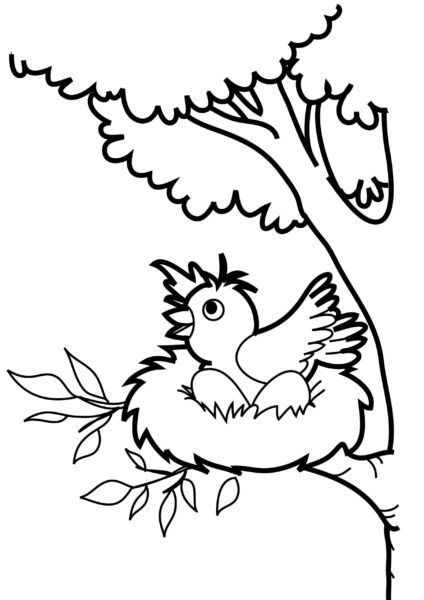 Tranh vẽ chưa tô màu con chim đẹp nhất cho bé tập tô (1)