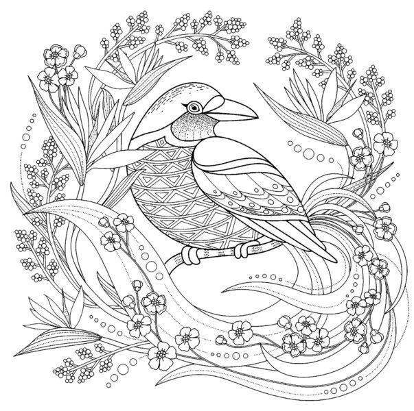 Tranh vẽ chưa tô màu con chim đẹp nhất cho bé tập tô (4)