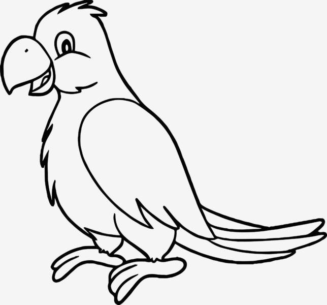 Tranh vẽ chưa tô màu con chim đẹp nhất cho bé tập tô (6)