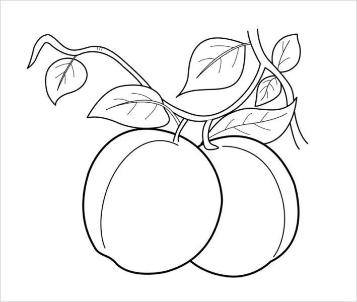 Tranh vẽ chưa tô màu trái cây đẹp cho bé tập tô (1)