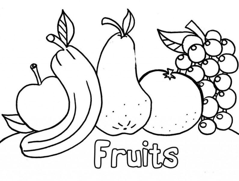 Tranh vẽ chưa tô màu trái cây đẹp cho bé tập tô (2)