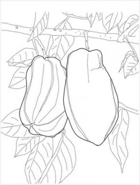 Tranh vẽ chưa tô màu trái cây đẹp cho bé tập tô (3)