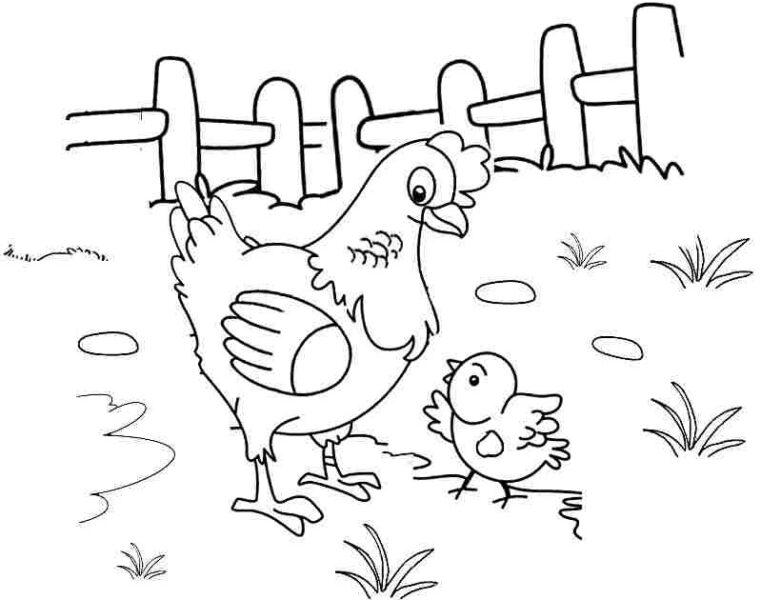 Tranh vẽ đen trắng con gà đẹp cho bé tô màu (2)