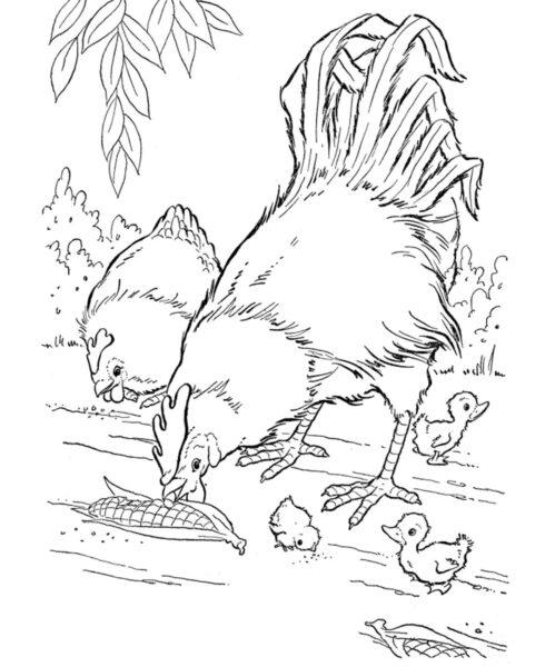 Tranh vẽ đen trắng con gà đẹp cho bé tô màu (3)