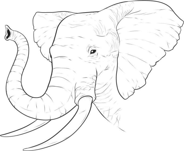 Tranh vẽ đen trắng con voi đáng yêu cho bé tô màu (2)