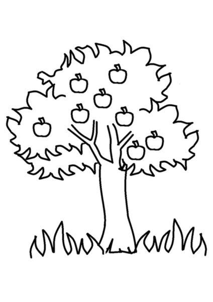 Ảnh vẽ quả táo cho bé tập tô (2)