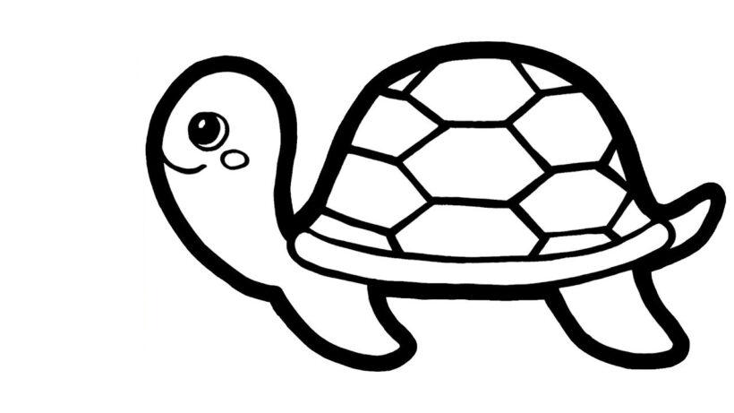 Cách vẽ con rùa đẹp