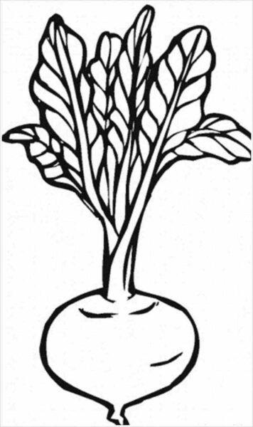 Cách vẽ rau củ quả đơn giản