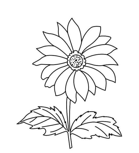 Giáo án tô màu hoa cúc