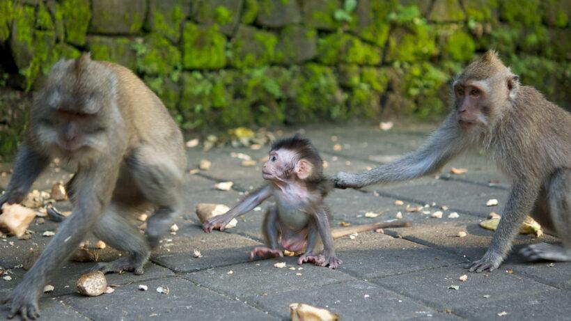 hình ảnh các loài khỉ