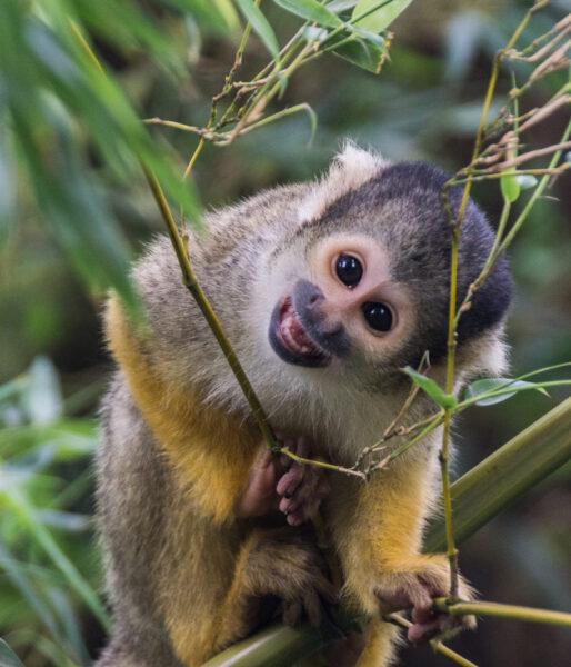 hình ảnh con khỉ đáng yêu đang ở trên cây