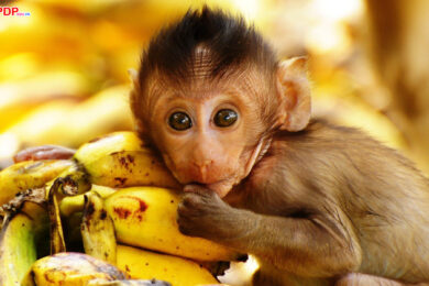 hình ảnh con khỉ dễ thương ngộ nghĩnh