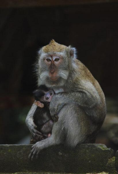hình ảnh con khỉ dễ thương về tình mẫu tử