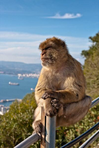 hình ảnh con khỉ đẹp nhất thế giới