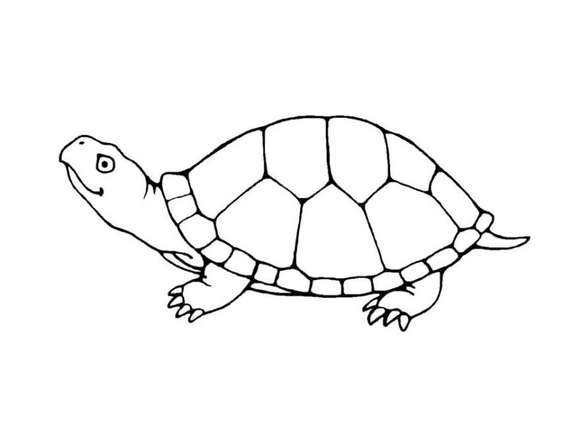 Hình ảnh con rùa