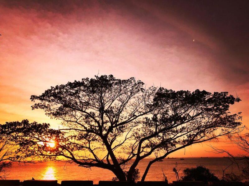 Hình ảnh hoàng hôn dưới tán cây cổ thụ